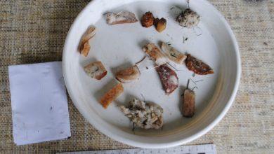 Mięso ze szpilkami. 67-latek chciał zabić psa sąsiadów? (fot.Policja Podlaska)