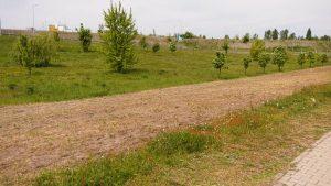 Ruda Śląska oprócz rzadszego koszenia trawników stawia na łąki kwietne