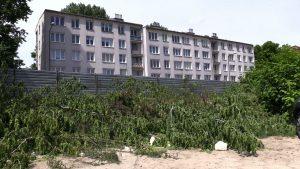 Katowice: Nielegalna wycinka drzew na Strzeleckiej? Ekolodzy zawiadomili policję