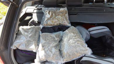 2 kg marihuany i amfetamina w samochodzie. Kolejny kibol zatrzymany [WIDEO]