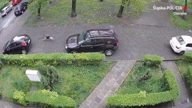 Chorzów: Wandal przegryzał opony samochodów! Nie usłyszy on jednak żadnych zarzutów [WIDEO]