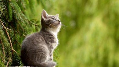 Zabili kota sąsiadki, bo zjadł im wędlinę (fot.poglądowe/www.pixabay.com)