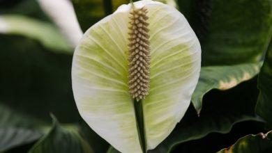 Rośliny oczyszczające powietrze (fot. pixabay.com)