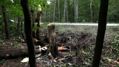 Katowice: Skoszone drzewa i BMW rozerwane na strzępy! Koszmarny wypadek na Beskidzkiej!