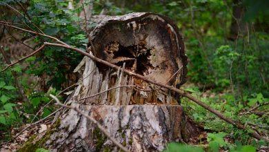 Tragiczny wypadek podczas prac w lesie. Nie żyje 56-latek. Traktorzysta odpowie za nieumyślne spowodowanie śmierci (fot.Policja Podkarpacka)