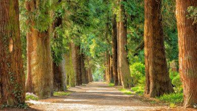 Park Śląski likwiduje dzikie wysypiska (fot. pixabay.com)