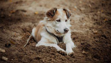 Postrzelił psa. Przeszkadzało mu, że zwierzę wchodzi na teren jego posesji (fot.poglądowe/www.pixabay.com)