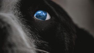Zabiła psa na oczach swoich dzieci. Kobieta była pijana (fot.poglądowe/www.pixabay.com)