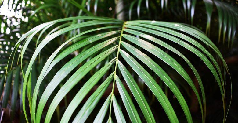 Zielone rośliny wpływają pozytywnie na kondycję fizyczną i psychiczną człowieka! Stąd zbiórka w Bytomiu. [fot. www.pixabay.com]