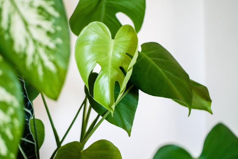 Rośliny doniczkowe dla początkujących (fot. pixabay.com)