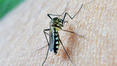 Domowe sposoby na ugryzienia komarów (fot. pixabay.com)