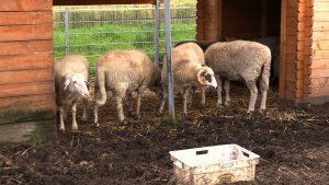 Przystań Ocalenie w Ćwiklicach niedaleko Pszczyny, w której schronienie znajdują zwierzęta uratowane przed rzeźnią, w drugiej połowie czerwca została zalana przez intensywne deszcze
