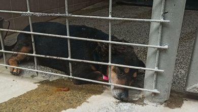 SZOK! 10 martwych psów znaleziono w schronisku! Zwierzęta, które przeżyły, trafią do schronisk w woj.śląskim [WIDEO]
