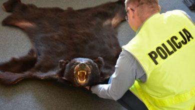 Ile można dostać za skórę z niedźwiedzia? Nawet 5 lat! (foto.policja)