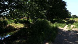 Ze strony miasta nie ma woli kompromisu, a proponowanie ławek i nasadzeń zastępczych roślin jest niepoważne – tak o działaniach władz Gliwic mówi grupa mieszkańców, która stara się uratować Wilcze Doły, czyli zieloną przestrzeń w Gliwicach