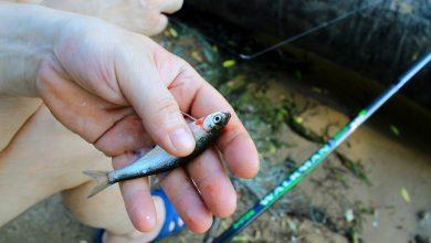 Wnioski o dofinansowanie dla hodowców ryb do 15 lipca. [fot. www.pixabay.com]