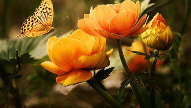 Masz niepotrzebny kwiatek? Wymień go na inny w Bytomiu. Fot. poglądowe pixabay.com