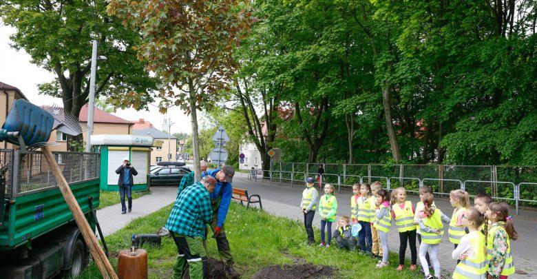 Katowice posadzą kolejne drzewa z aplikacji. Pierwsze nasadzenia już jesienią (fot.UM Katowice)