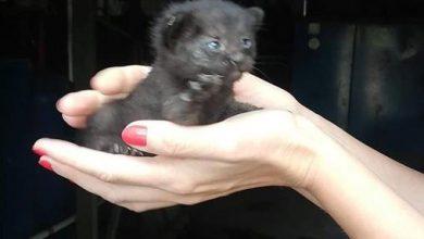 Straszne! Ktoś wyrzucił tego słodkiego kota do kontenera na na gruz! Fot. ZOMM