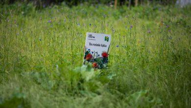 W Bielsku-Białej powstaną kolejne łąki kwietne. Fot. UM w Bielsku-Białej