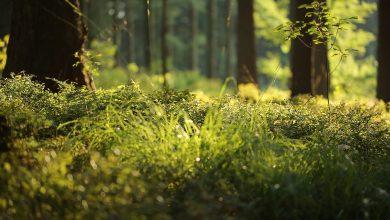 Park Piny w Tarnowskich Górach może odzyskać dawny blask. [fot. poglądowa / www.pixabay.com]