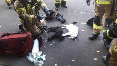 """""""Ratujemy zawsze i wszędzie!"""" - strażacy uratowali z pożaru dwa koty. [fot. KM PSP w Gdyni]"""