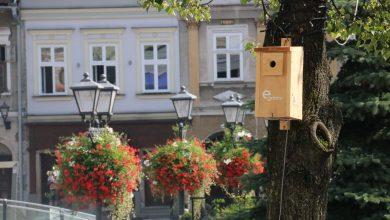 Budki dla ptaków z kodem QR, kablami i Wi-Fi w Bielsku. Do czego służą? Fot. UM Bielsko-Biała