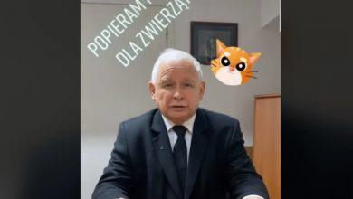 Jarosław Kaczyński na TikToku! Rzucił wyzwanie Mateuszowi Morawieckiemu i Krzysztofowi Sobolewskiemu