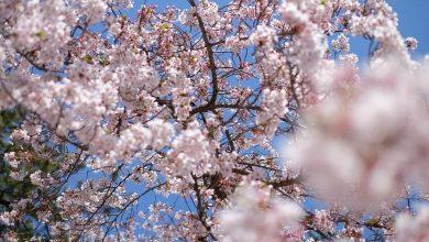 Ogród japoński w Bielsku-Białej. To będzie drugi największy ogród tego typu w Polsce. [fot. poglądowa / www.pixabay.com]