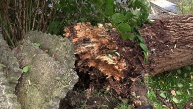 Dramatyczne sceny z placu zabaw w Tarnowskich Gór. Ogromne drzewo przewróciło się tu wprost na plac zabaw!