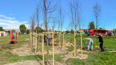 Sosnowiec: Trwa nasadzanie drzew - mieszkańcy będą mieli nowy park. [fot. Arkadiusz Chęciński Facebook]