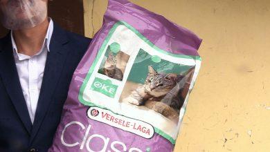 700 kilogramów! Imponujący wynik zbiórki karmy dla kotów w Żorach