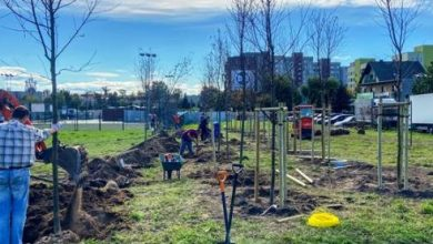W Sosnowcu powstaje nowy park. Zasadzą w nim 1 tys. drzew. Fot. UM Sosnowiec