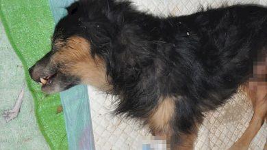 Pies zakopany żywcem. Policja szuka właściciela (fot.Policja Lubelska)