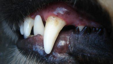 Prokuratura chce uśpić psy, które pogryzły 12-letniego chłopca. Fot. poglądowe pixabay.com