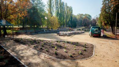 Masowe sadzenie drzew w Sosnowcu! Będzie ich 47 tysięcy [ZDJĘCIA]. Fot. UM Sosnowiec