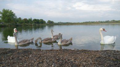 W Piekarach Śląskich liczą ptaki. To czas ich jesiennych wędrówek (fot.UM Piekary Śląskie)