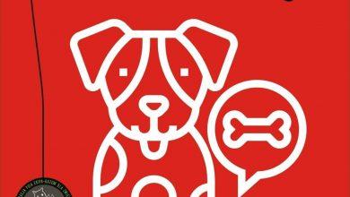 Fundacja Psia Ekipa wzywa do pomocy wszystkich tych, dla których los zwierząt nie jest obojętny. Akcja Nakarm Reksia w toku. [fot. Fundacja Psia Ekipa Facebook]