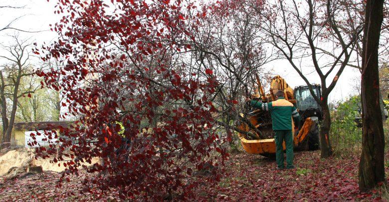 Mimo tego, że nie było to łatwym zadaniem zdecydowano, że 31 drzew zostanie przesadzonych, a nie wyciętych. Zasilą drzewostan m.in. okolicznych skwerów. [fot. Arkadiusz Chęciński Facebook]