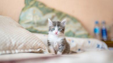 Karma dla kota - jak wybrać najlepszą?