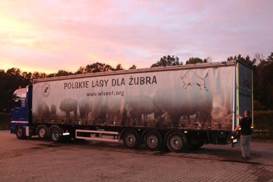 Żubry ze Śląska pojechały na wakacje! Zwierzęta są już na Półwyspie Iberyjskim