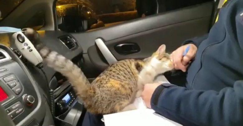 Śląskie: Policjanci na patrolu przygarnęli kotka i nici z wypisywania mandatów ;) (fot.KWP Katowice)