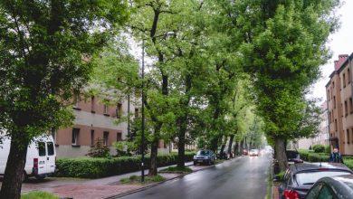 100 nowych drzew i ponad 14 tys. bylin ozdobi gliwickie drogi (fot.GZM)
