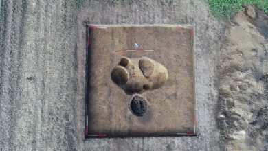 W ostatnich dniach archeolodzy odkryli tu piec do wypieku ceramiki ze świetnie zachowanym rusztem. Znalezisko datuje się na przełom II i III w p.n.e. [fot. Muzeum Śląskie]