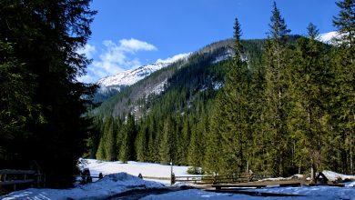 Ślisko na szlakach w Tatrach. Władze TPN ostrzegają (fot.poglądowe/www.pixabay.com)
