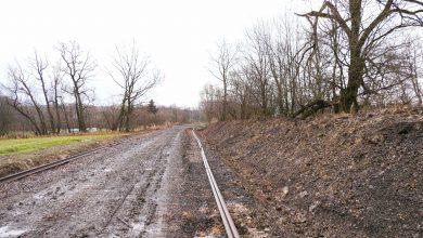 Protesty nie pomogły. Wzdłuż linii kolejowej Cieszyn-Goleszów wyciętych zostanie 800 drzew