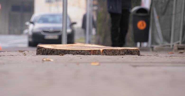 Po informacji o wycięciu drzew na miejscu pojawili się zaniepokojeni społecznicy oraz radni Katowic.