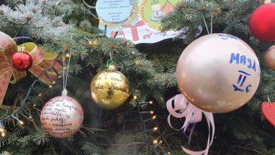 Takiej choinki ze świecą szukać na całym Śląsku. W Bytomiu jest bożonarodzeniowe drzewko, na którym każdy może zostawić swoje życzenie (fot.UM Bytom)