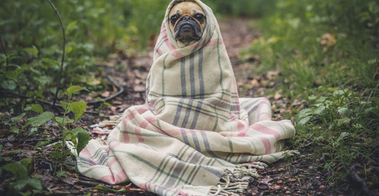 Pamiętaj o obowiązku zaszczepienia psa! Jeśli tego nie zrobisz czeka Cię grzywna! Będą kontrole! (fot.poglądowe/www.pixabay.com)