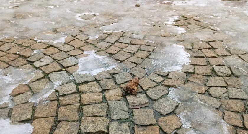 Śnieg stopniał, Mysłowice w odchodach [ZDJĘCIA]. Fot. Mysnet.pl